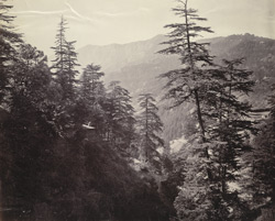 Mountain scenery, Simla